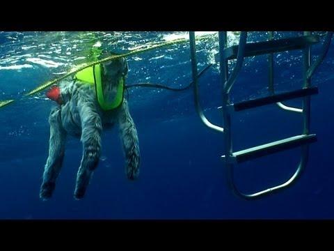 Doggie Drama | MythBusters Jawsome Shark Special -- Shark Week 2012