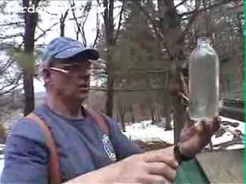 Make Maple Syrup #1 GardenFork.TV