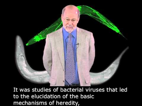 H. Robert Horvitz (MIT/HHMI): Discovering Programmed Cell Death with English Subtitles