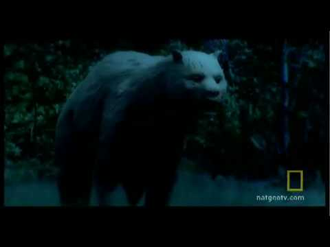 Giant Prehistoric Bear