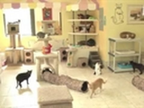 Confessions: Animal Hoarding- Bonus Video: Joy's Story