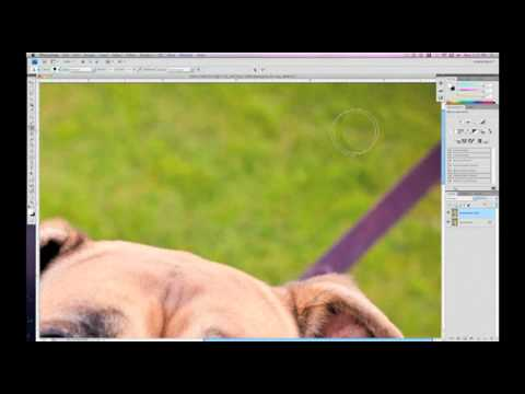 Dog Photography For Dummies - Leash Removal