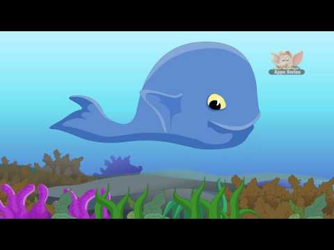 Animal Facts - Blue Whale