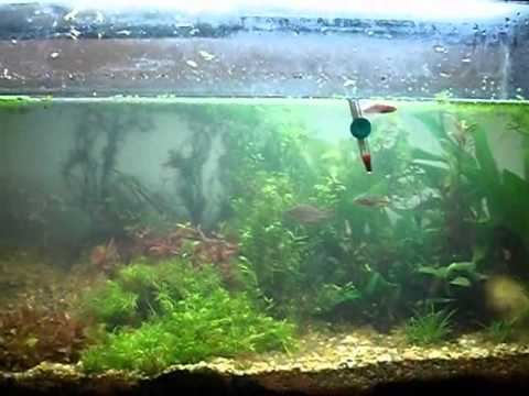 125 Gallon Planted Aquarium: The Plants And Fish Are In
