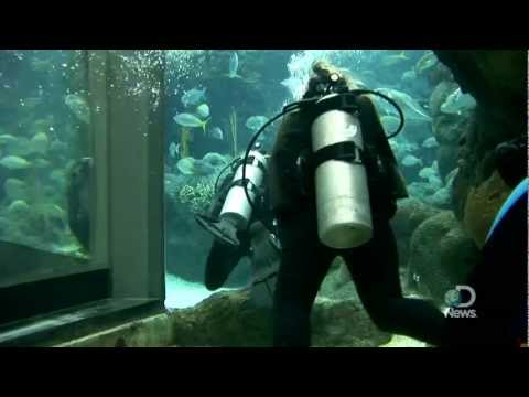 Shark Week 2011: Shark Diving 101