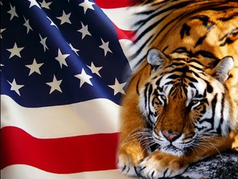 Tigers in the U.S.