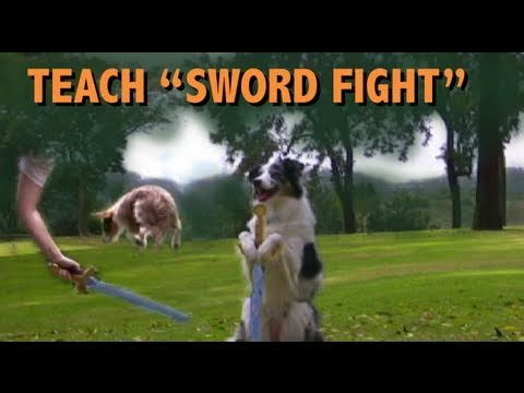 Dog tricks: How to teach Sword Fighting- clicker training
