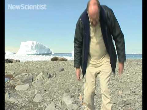 Antarctic species tallied up