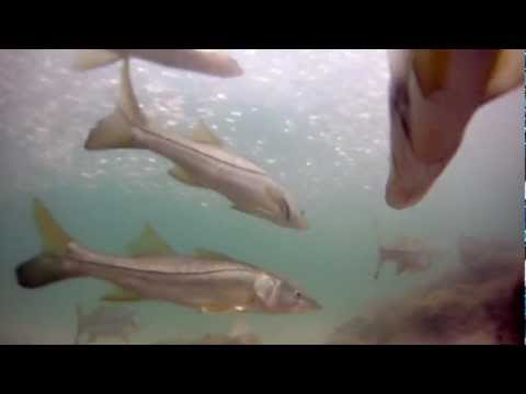 Snorkeling at Caspersen Beach in Venice Florida with a GoPro