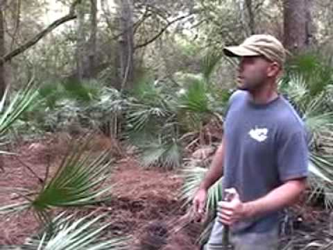 Habitat cougar puma panther florida gator - Big Cat TV