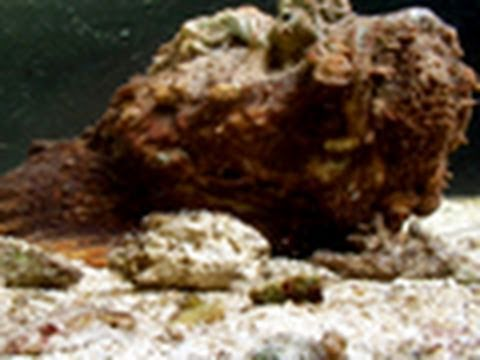 Stone Fish Blues