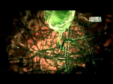 Monsters Inside Me- Hijacked Blood Cells