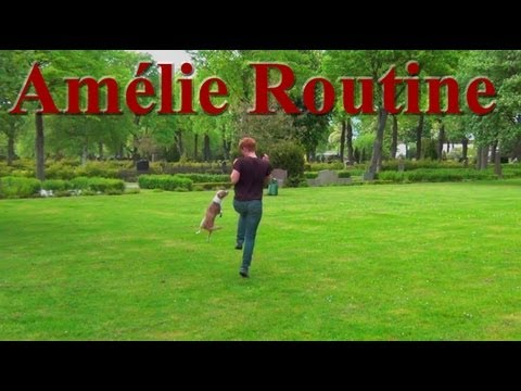 Tug's Amelie Routine- Canine Freestyle Clicker dog training