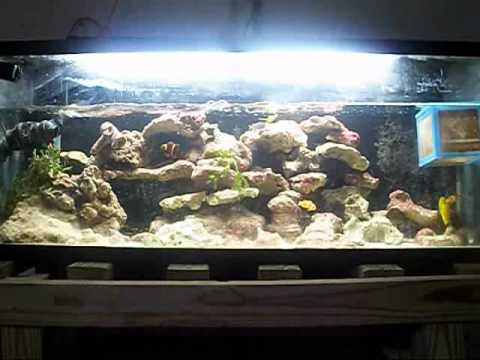 How To Care For Live Rock, Stack Live Rock, Salt Water Reef Aquarium