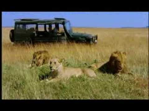 NATURE | The Vanishing Lions | Preview | PBS