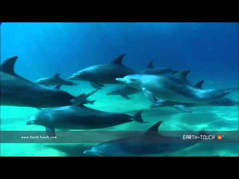Vocal dolphins swim up close