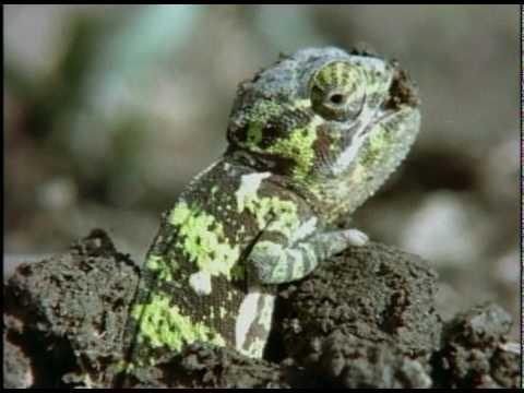 Chameleon Moms: Wandering Women