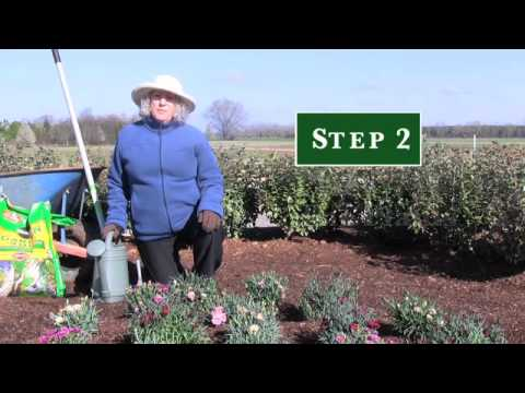 How to Plant a Perennial Garden - Garden Club Select