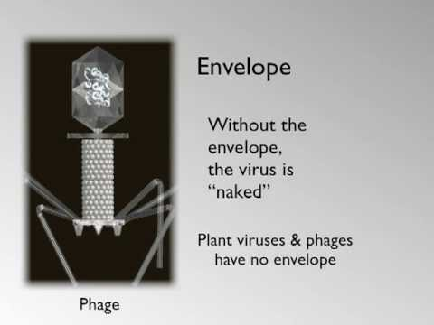 Virus Envelope