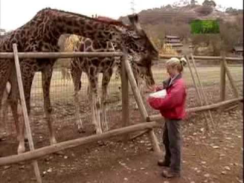 Growing Up Giraffe- Building a Relationship