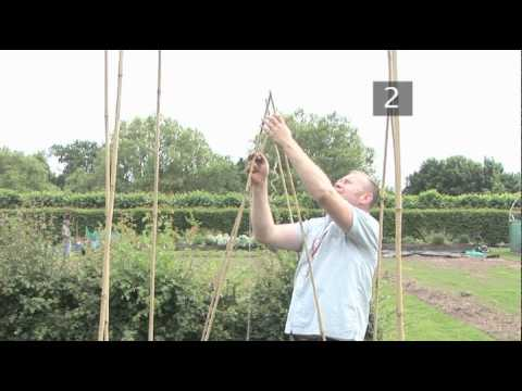 How To Build A Ridge Support For Runner Beans