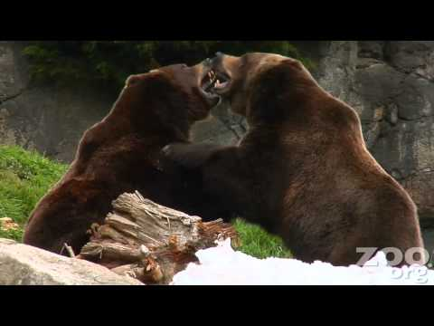 20 Million Moments of Cuteness at Woodland Park Zoo