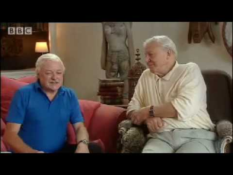 Rwandan army shoot out  - Gorillas Revisited with Sir David Attenborough - BBC wildlife & animals