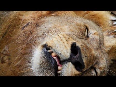 Lion Hunters
