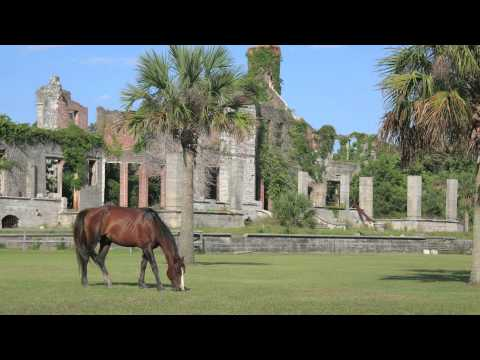 The Coolest Stuff on the Planet- Cumberland Island