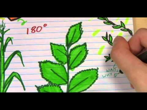 Doodling in Math: Spirals, Fibonacci, and Being a Plant [Part 3 of 3]
