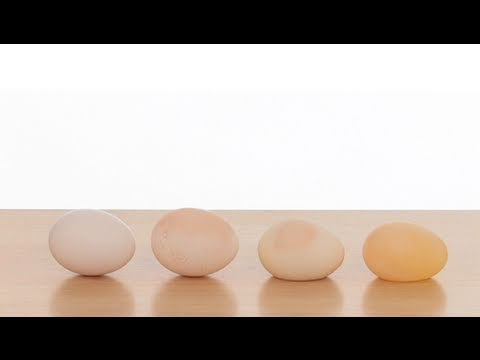 Naked Egg - Sick Science! #033