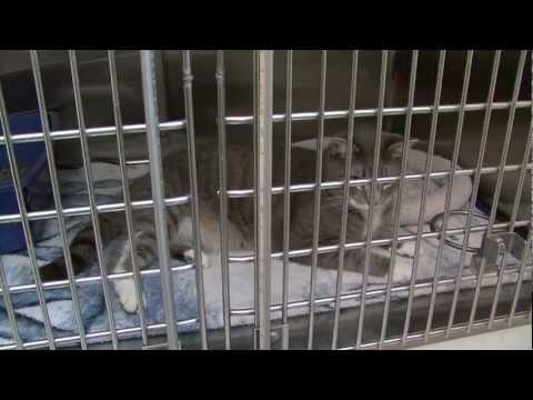 Adopt-A-Cat Month 2011