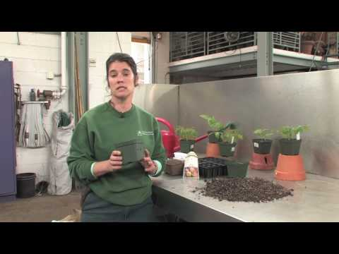The Edible Garden — Starting Seeds Indoors