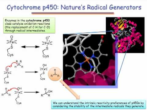 Cytochrome P450: Radicals in a Biochemical Setting