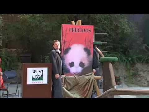 Panda cub name unveiled, Nov. 26, 2007