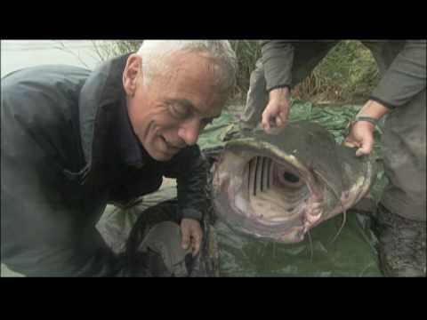 Open Fish Gullet