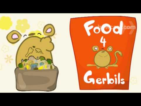 How To Care For a Pet Gerbil