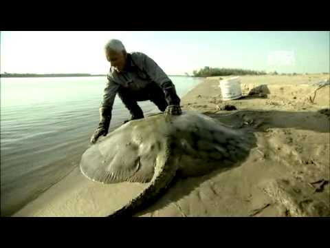 River Monsters: Alien Fish