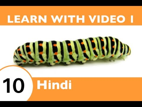 Learn Hindi with Video - Oh, What a Tangled Web We Weave, When We Teach Hindi Insect Vocabulary!