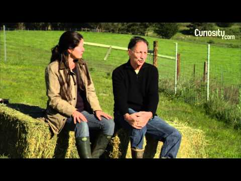 Nicolette and Bill Niman: Sustainable Farming Feeding Nations?