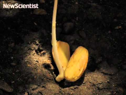 Acorn to oak tree time-lapse