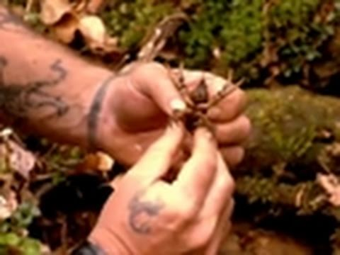 Dual Survival- Crayfish Snack