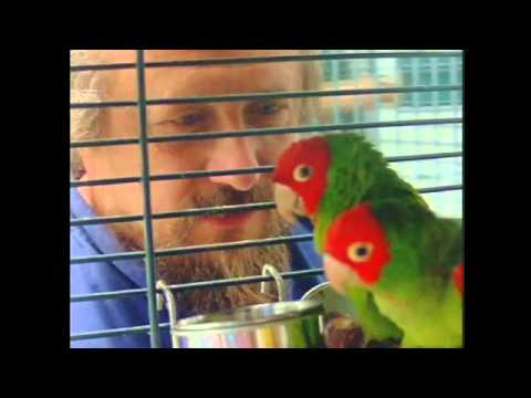 Independent Lens | The Wild Parrots of Telegraph Hill | Trailer | PBS