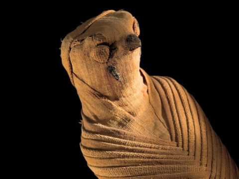 Animal Mummies: Pets of the Pharaohs