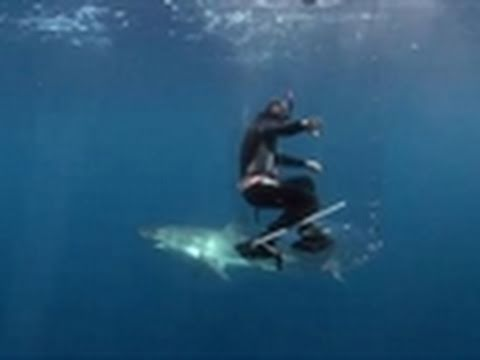 Shark Week 2011- The Shark Tube