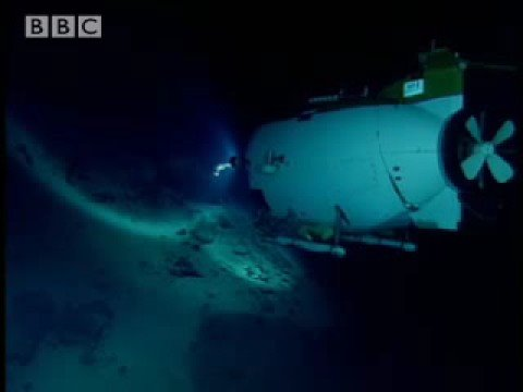Rare life on the sea floor- The Abyss- BBC Wildlife