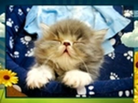 America's Cutest Cat- Sleepy Kitty