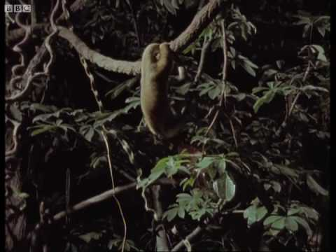 Night flowering & tiny honey bear babies - Jungle Nights - BBC Earth