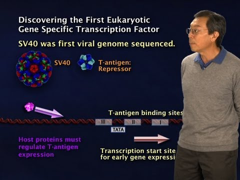 Robert Tjian (Berkeley/HHMI) Part 1: Gene regulation: An introduction