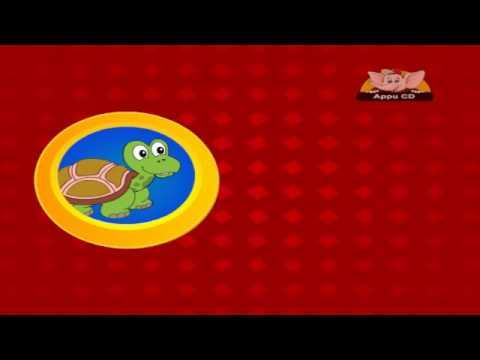 Animal Sounds - Tortoise